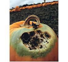 Rotting Halloween Pumpkin Photographic Print
