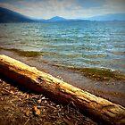 Drift Wood by DelisaCarnegie