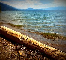 Drift Wood by DelisaCarnegie