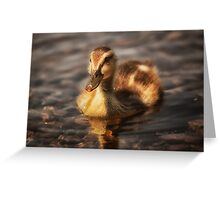 Water drops on duckling Greeting Card