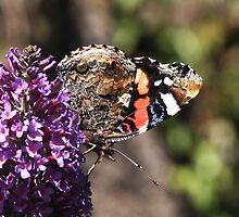 Art Deco in Nature - Red Admiral butterfly by Rivendell7