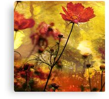 Cosmea  (Abstract Red) Canvas Print