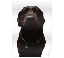 Black Labrador   Poster