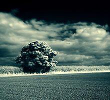 Darken Sky by Brian Avery
