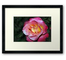 In your face beauty Framed Print