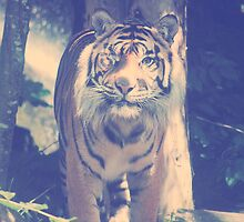 The Sumatran Tiger. by GlassCow