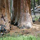 Yosemite Giants by Ellen Cotton