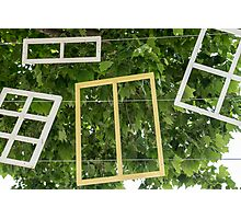 frames in a tree Photographic Print