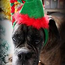 A Boxer Christmas - Christmas Card Series by Evita