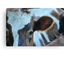 brown and white Canvas Print