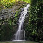 Maunawili Falls  by Clark Thompson