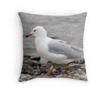 Herring Gull Walking on a Rocky Beach Throw Pillow