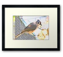 At the tin swimming hole Framed Print