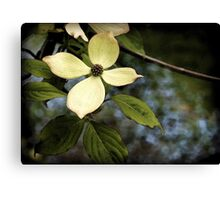 Dogwood in Watercolor Canvas Print
