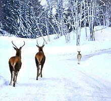 Joy to the World - Omega Wildlife by Poete100
