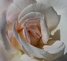 Pastel Petals by Monnie Ryan