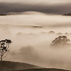 Misty Myalla Morning by Paul Campbell Psychology