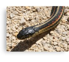 Head of a Red Sided Garter Snake Canvas Print