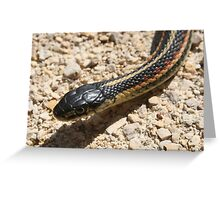 Head of a Red Sided Garter Snake Greeting Card