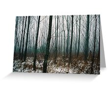 Aspen Trees in Winter Greeting Card