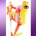Yellow frog by Lotfibouha