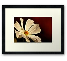Cosmo morning Framed Print