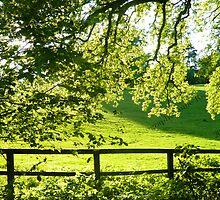 Hertfordshire Nature Silhouettes by jamierickman