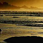 Ocean Breeze by aidan  moran