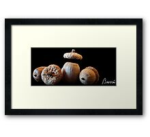 Inspired by Nature: Acorns Framed Print