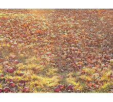 Late Harvest Photographic Print