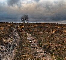 Norland Moor by Glen Allen