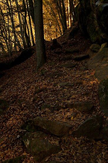 Dark Woods by Walter Quirtmair