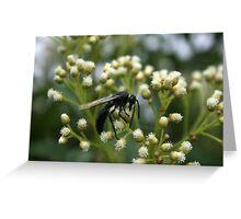 Black Bee Pollinating Flower Greeting Card
