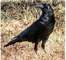 Crow Knows Photographic Print