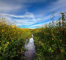 Sunflower Stream by Bob Larson