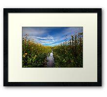 Sunflower Stream Framed Print