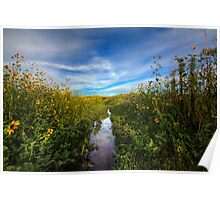 Sunflower Stream Poster