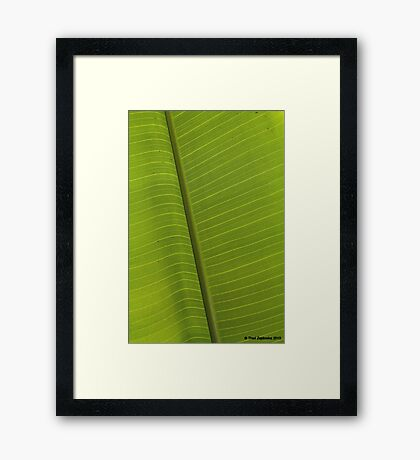 Field of green Framed Print