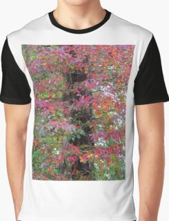 Fall Color Leaves Graphic T-Shirt