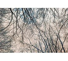 Branches Infrared Nature Photographic Print