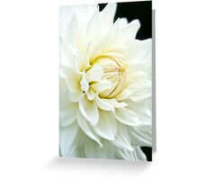 White Daliah Greeting Card