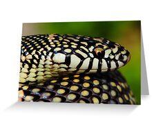Apalachicola (Goins) King Snake Greeting Card