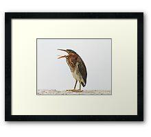 Small heron...big mouth! Framed Print