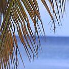 Palm leaf, Ocho Rios, Jamaica by camerahappy