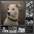 Pets Collage by WeeZie