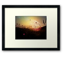 Through the Field of Dreams Framed Print