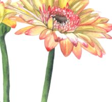 Gerbera Sticker