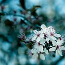 Hello blossom by Colleen Milburn