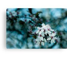 Hello blossom Canvas Print