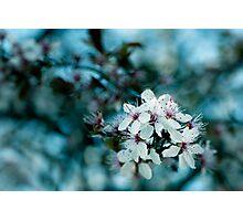 Hello blossom Photographic Print